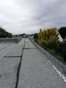 Taubenabwehr schützt Flachdach und Fassade vor Verschmutzung und Folgeschäden